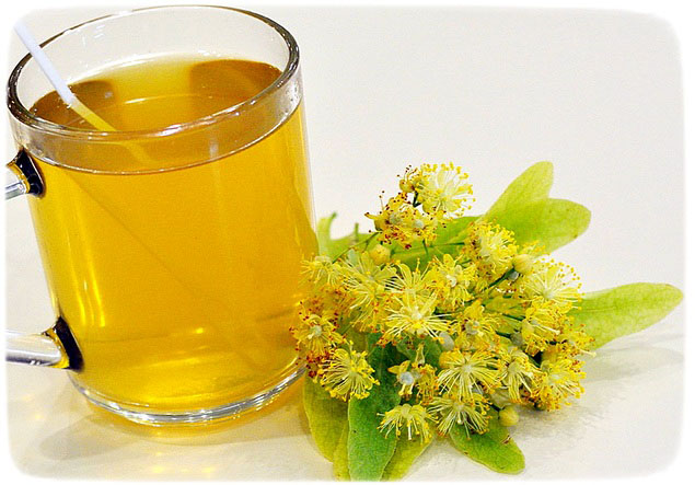 Польза липовых цветов, как собирать и заваривать липовый чай
