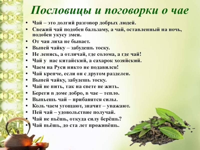«вчерашний чай – змеиный яд». эксперт – о самом популярном напитке