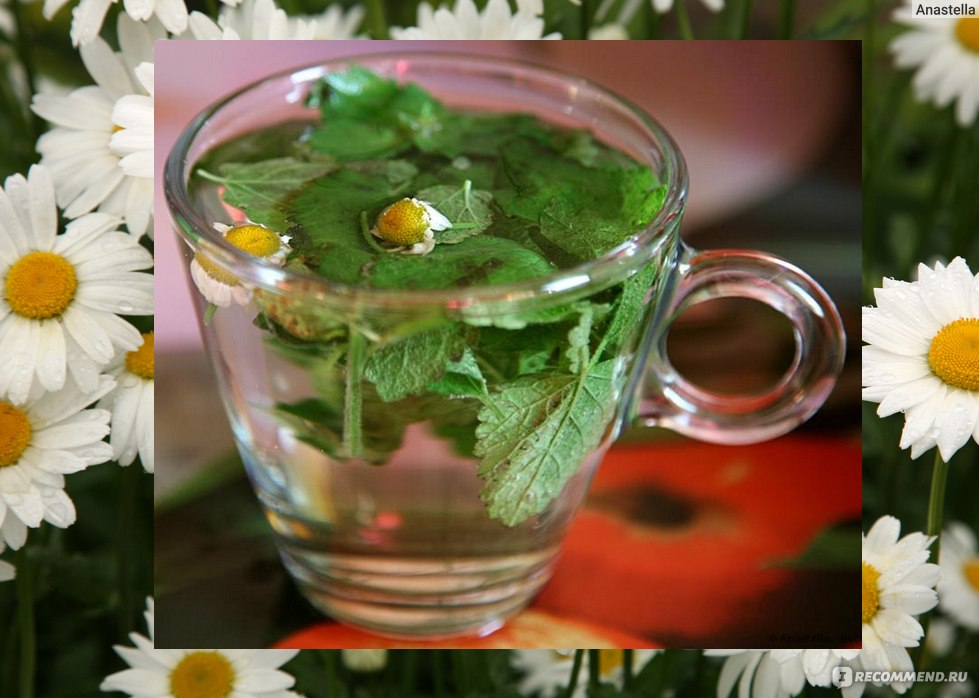 Чай с мелиссой — польза и вред для организма