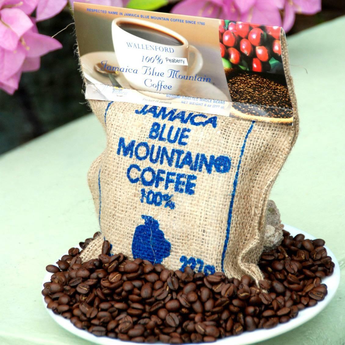История ямайского кофе. самый известный кофе блю маунтин.