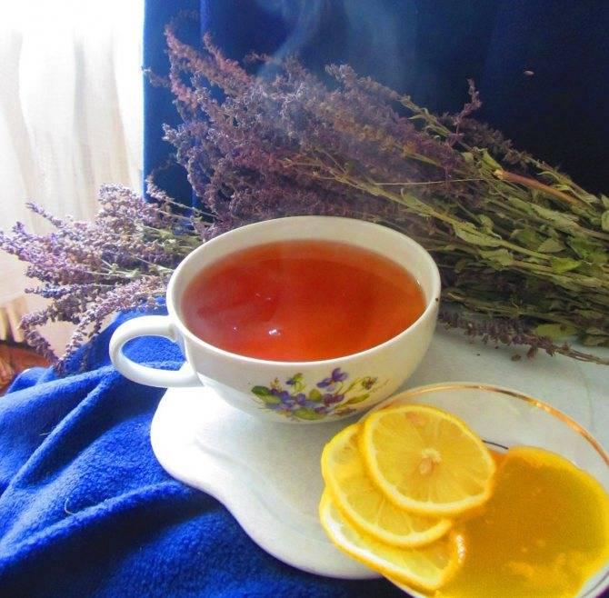 Листья шалфея: полезные свойства и противопоказания, инструкция по применению для приготовления чая, польза и вред фиточая в пакетиках для здоровья