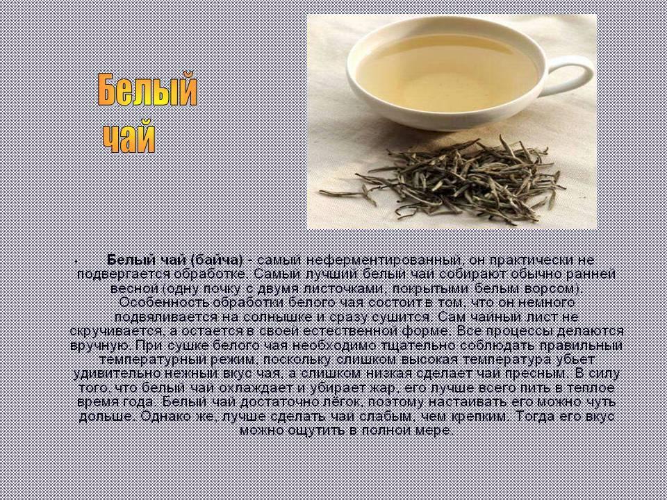 Белый чай: польза и вред, как заваривать элитный напиток