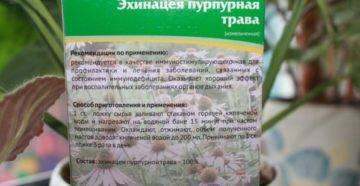 Эхинацея: лечебные свойства, противопоказания и рецепты