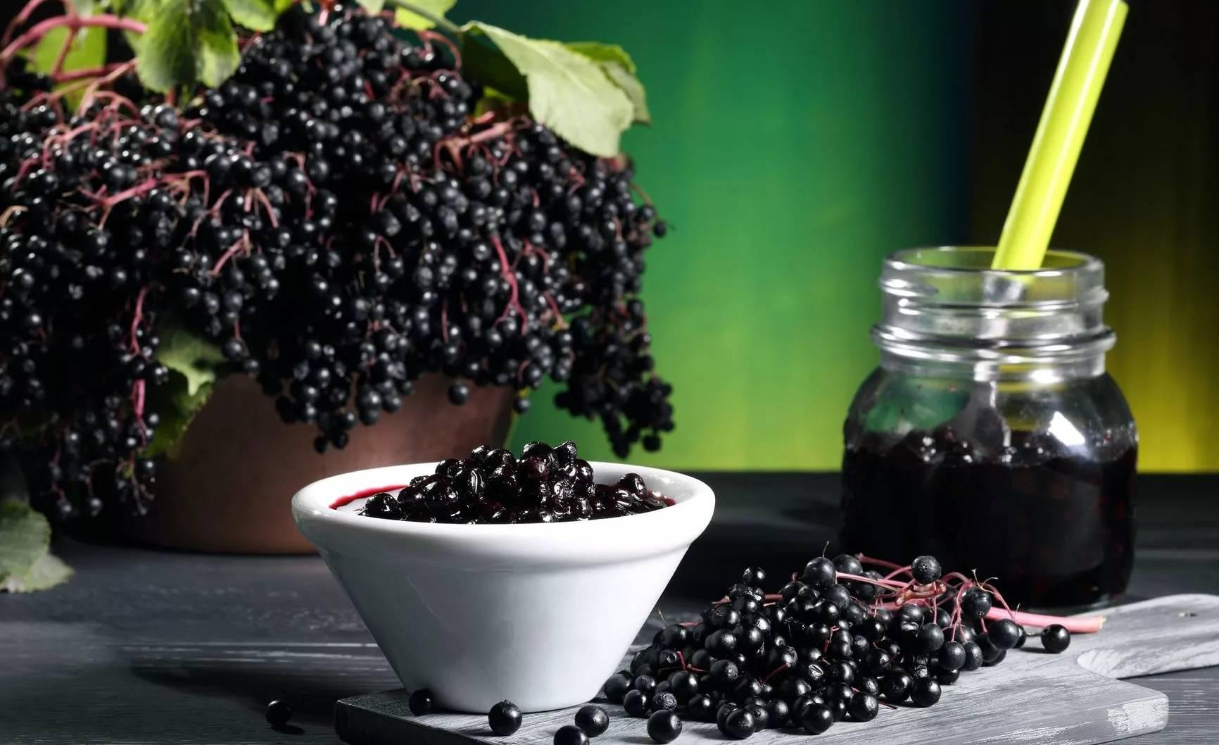 Настой черемухи: лечебные свойства, рецепты на ягодах, цветках, листьях, коре