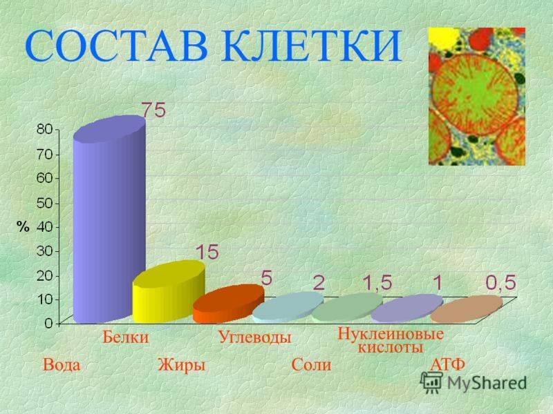 Химический состав кофе - зерен и растворимого кофе: диаграмма и таблица, из чего состоит кофе