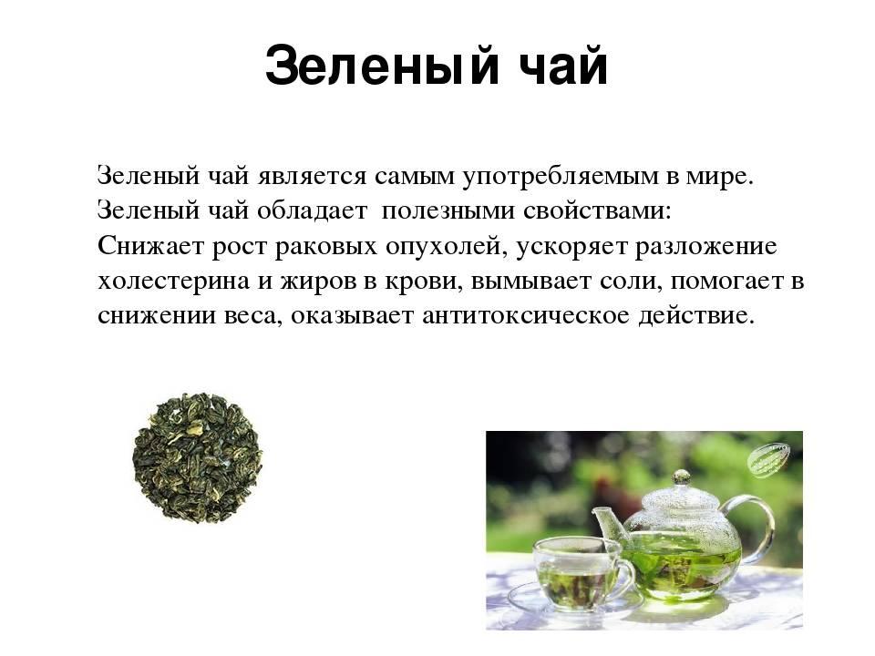 Зеленый чай – польза и вред, противопоказания