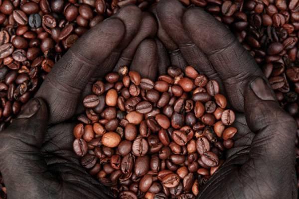 Кенийский кофе - сорта, отзывы и цены