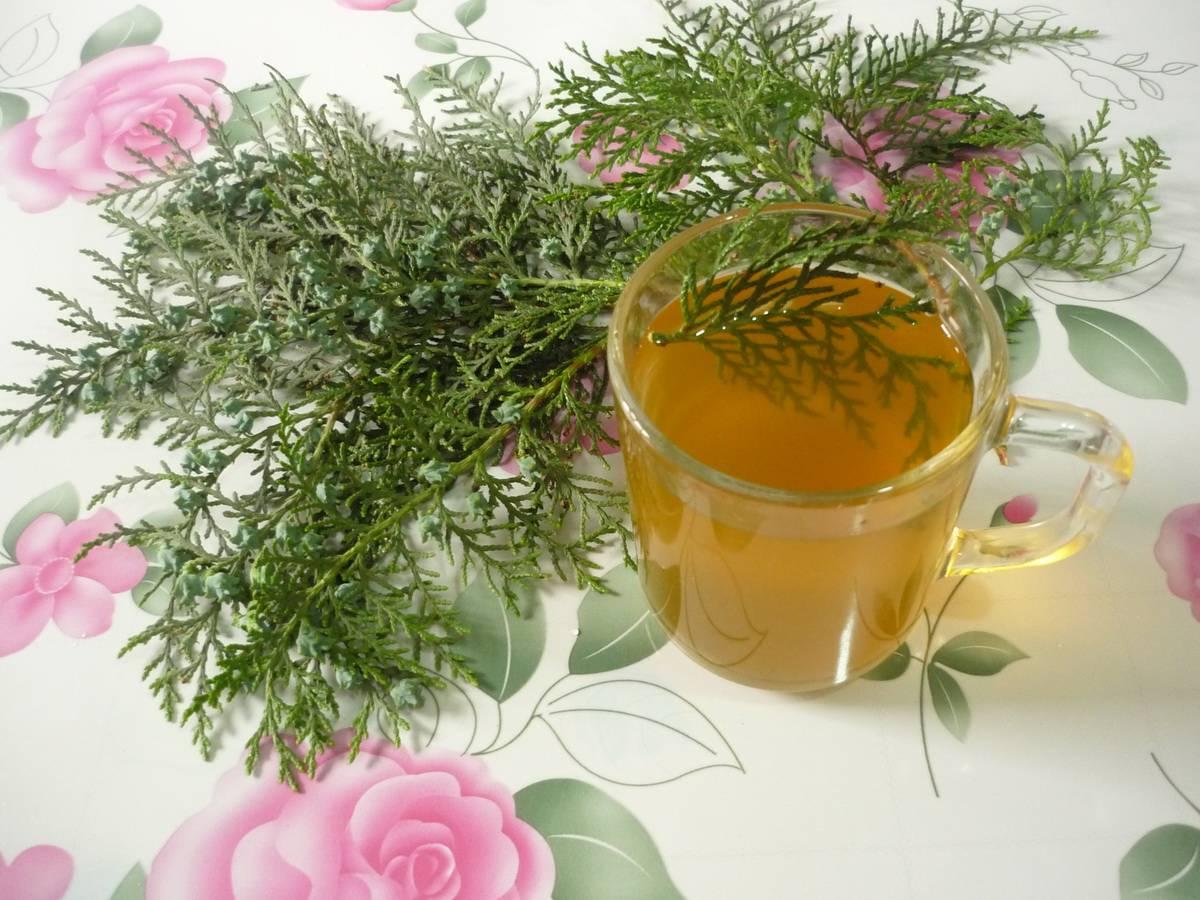 Чай из хвои - полезные свойства и противопоказания