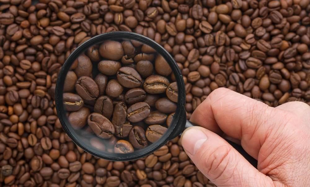 Белый кофе — что это за напиток и как его приготовить