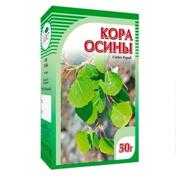 Лечебные свойства коры осины, применение настойки и отвара, противопоказания   здорова и красива