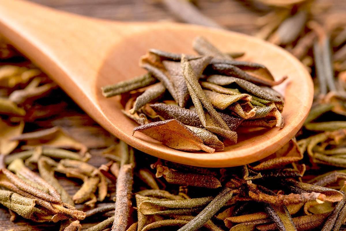 Трава саган дайля лечебные свойства, применение и противопоказания