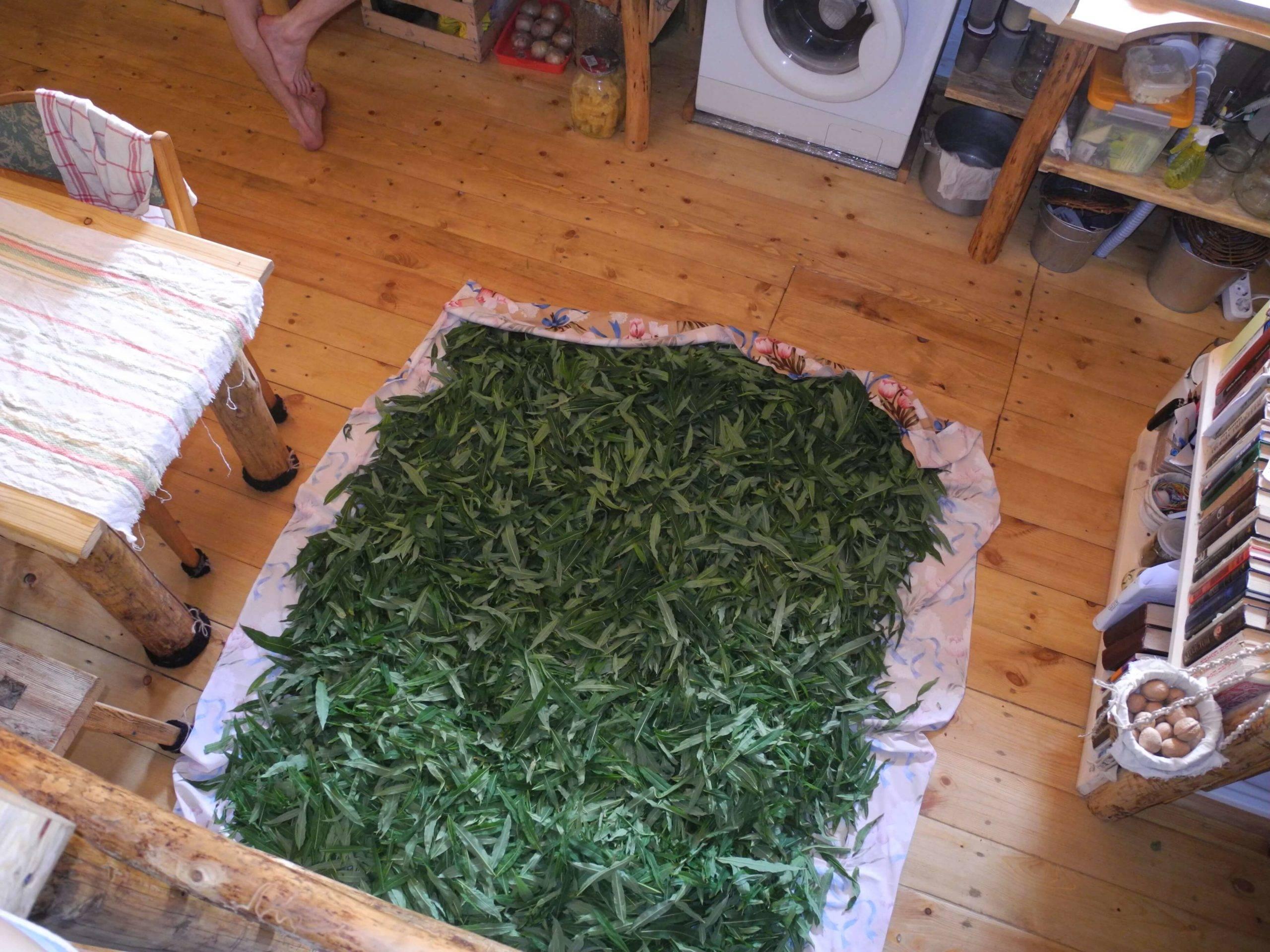 Как сушить душицу: правильная сушка в домашних условиях - засушим.ru