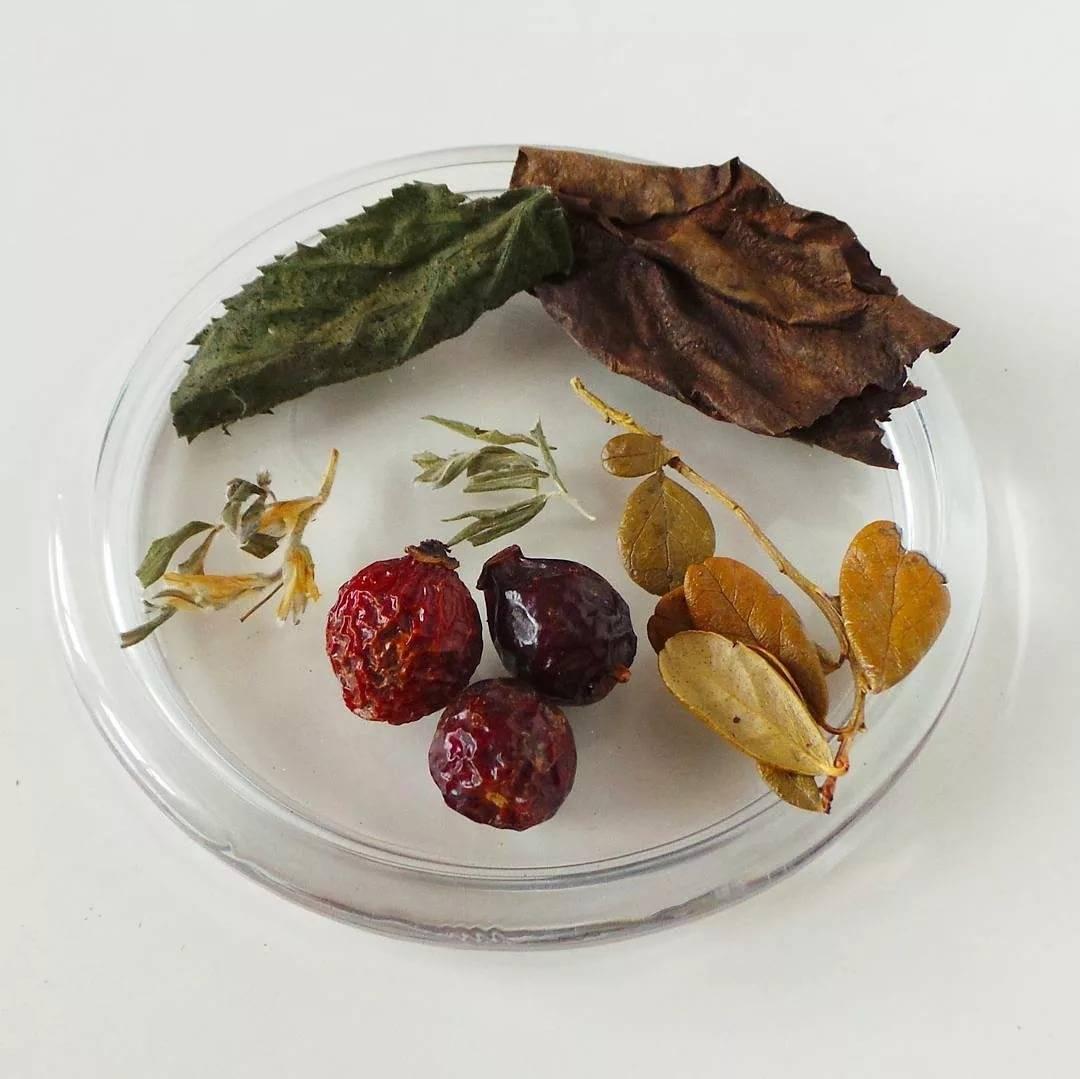 Чай с барбарисом полезные свойства как заварить