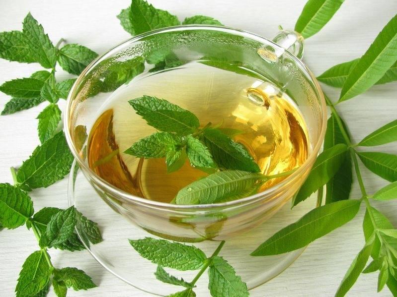 Чай с мелиссой: польза и вред