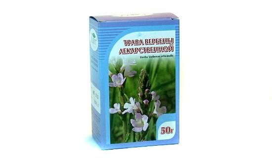 Лечебная трава вербена: полезные свойства, применение и противопоказания