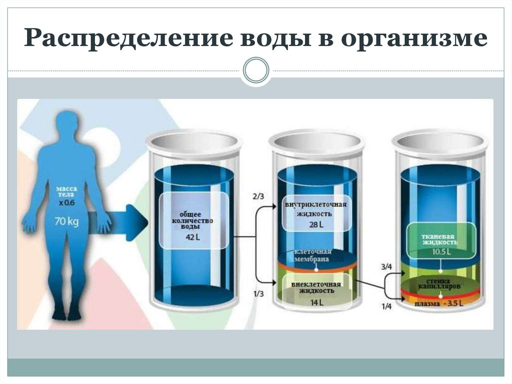 Как вывести жидкость из организма