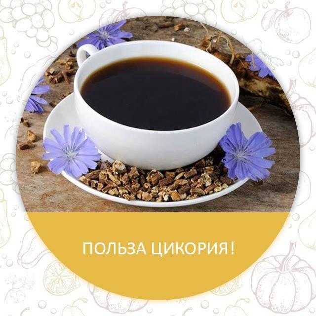 """Польза и вред заменителя кофе цикория для здоровья – портал """"стань лучше"""""""
