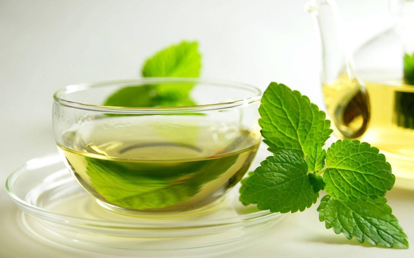 Польза и вред чая с мятой для женщин, особенности применения
