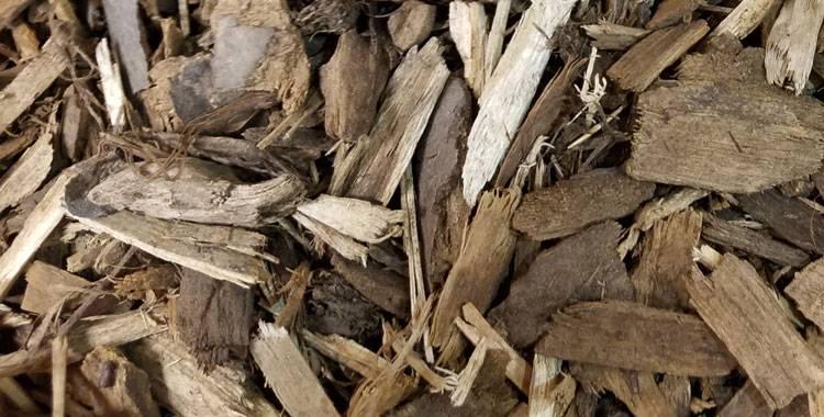 Отвар осиновой коры польза и вред