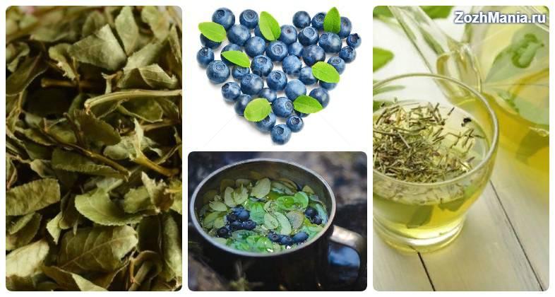 Чай с черникой: рецепты, химический состав
