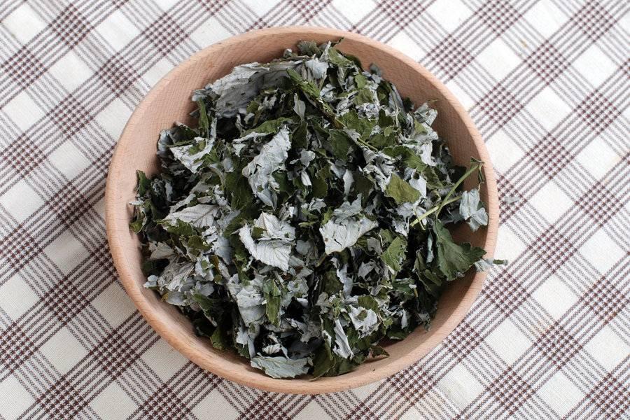 Листья черники: лечебные свойства и противопоказания, чем полезен чай, отвар для организма человека при сахарном диабете »