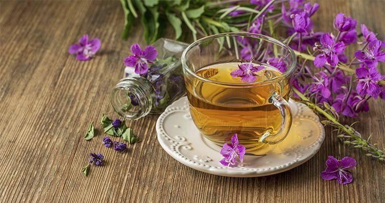 Иван-чай - полезные свойства и противопоказания. как правильно заваривать и пить чай из кипрея для лечения
