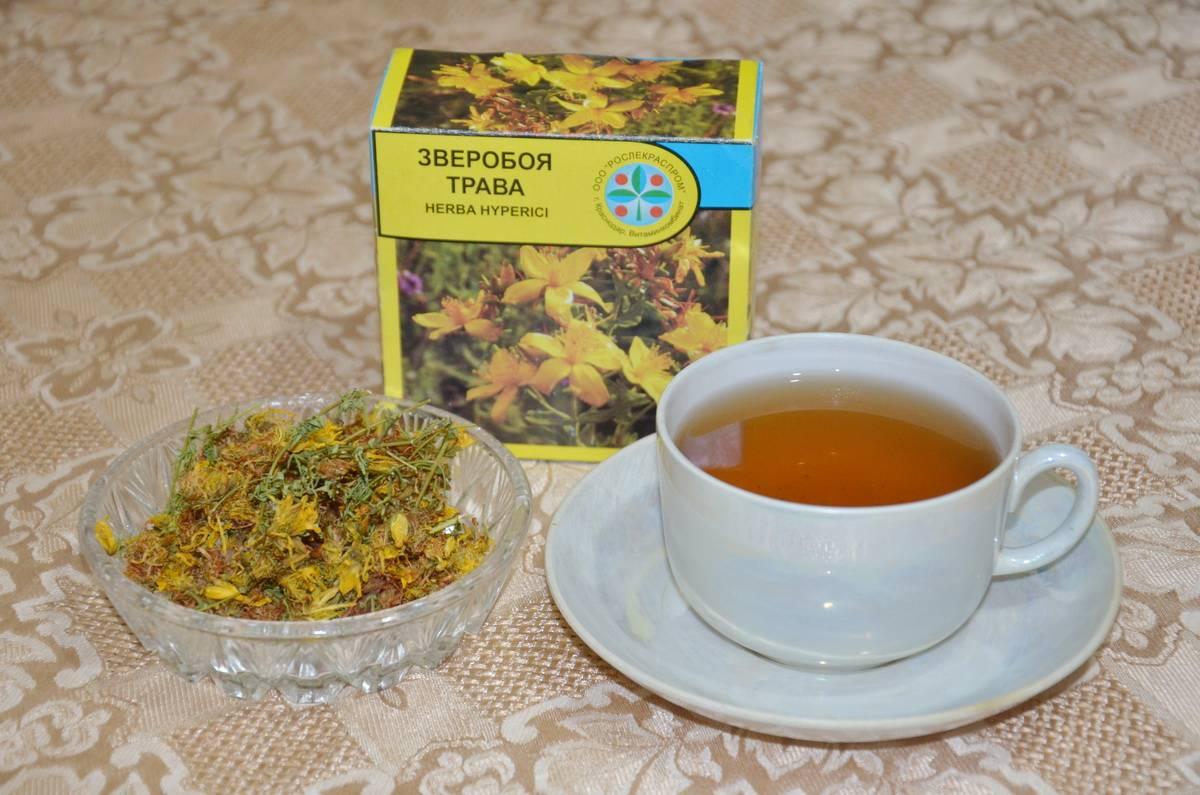 Чай из зверобоя: лечебные свойства, рецепт заварки - целебные травы