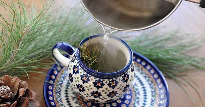 Хвойный чай — таежный эликсир долголетия