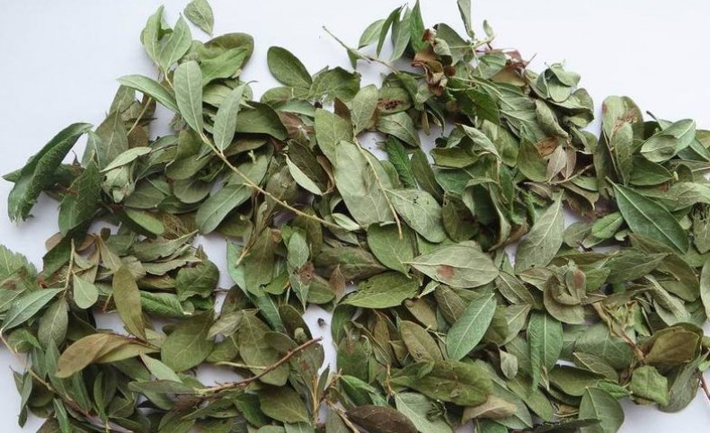 Листья брусники: полезные свойства и противопоказания |