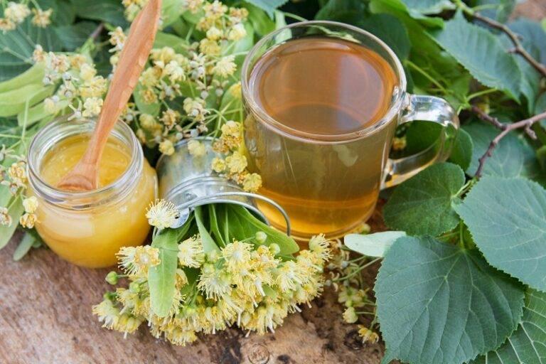 Белая акация — лечебные свойства и противопоказания робинии. чай из акации - новая медицина