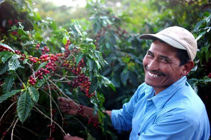 Сравнение 5 разновидностей кофе сорта марагоджип