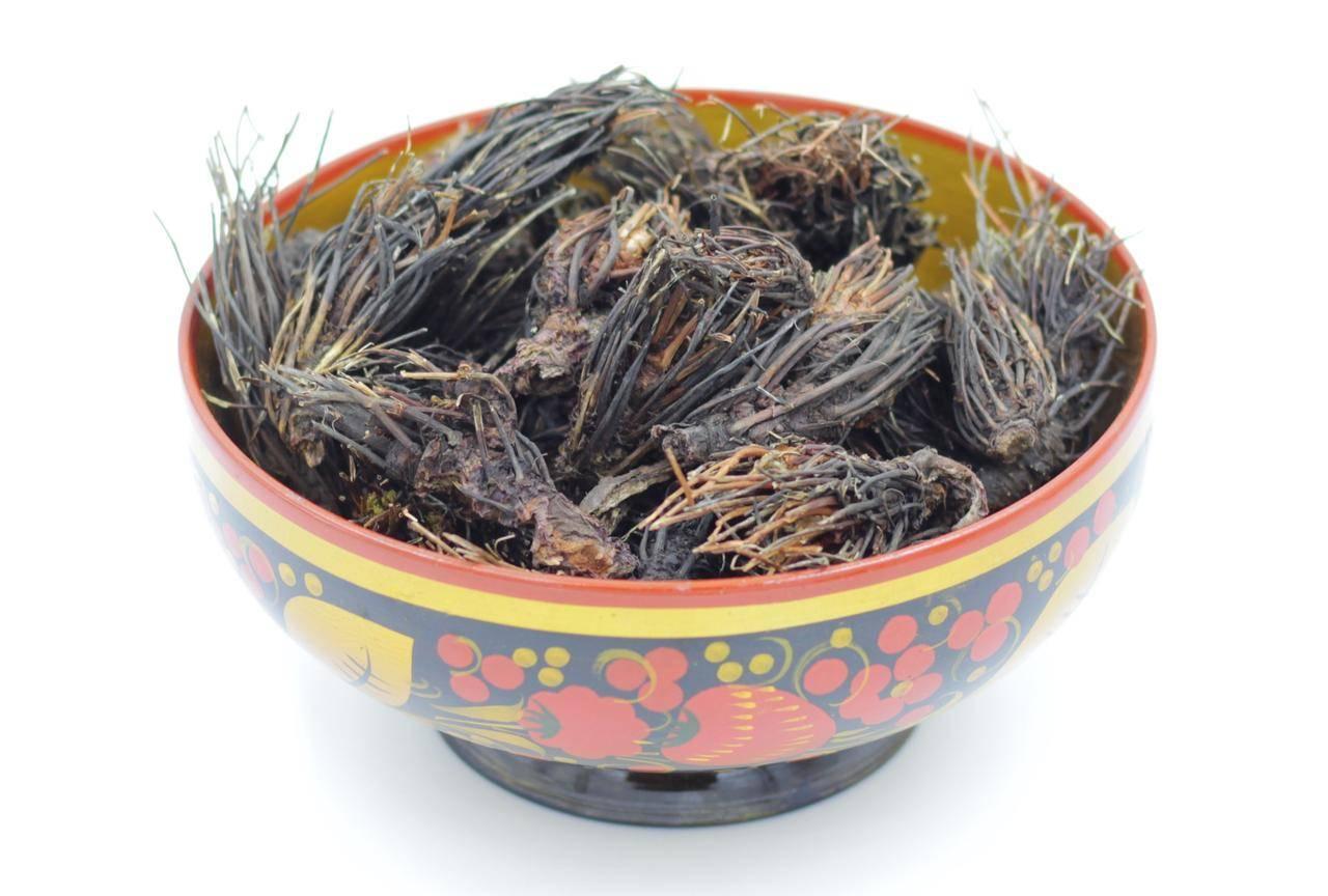 Лечебные свойства, противопоказания к применению, инструкция и обзор отзывов об использовании травы «красная щетка» женщинами
