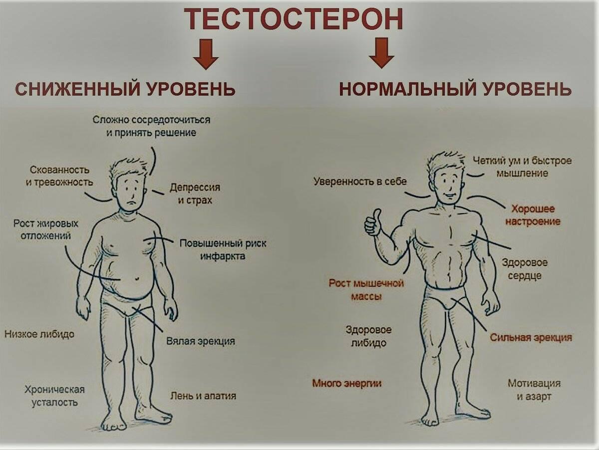 Продукты снижающие тестостерон у мужчин: полный список