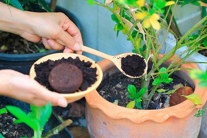 Кофейная гуща как удобрение, для каких растений допустима подкормка, отзывы
