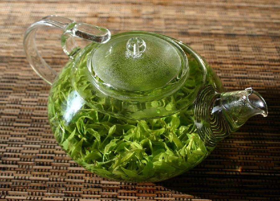 Чай из клевера лугового (красного): польза и вред, приготовление