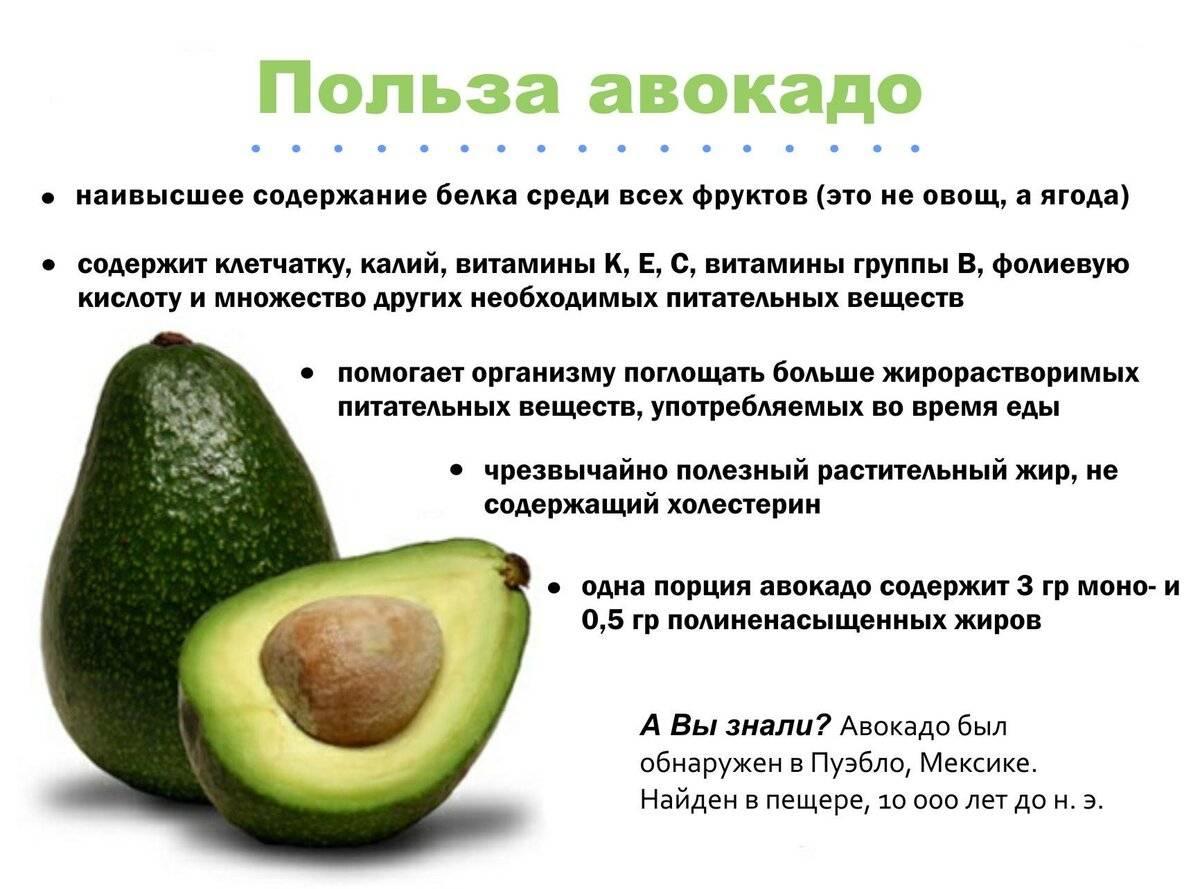 Польза авокадо - 130 фото и видео применения с пользой для мужчин и женщин