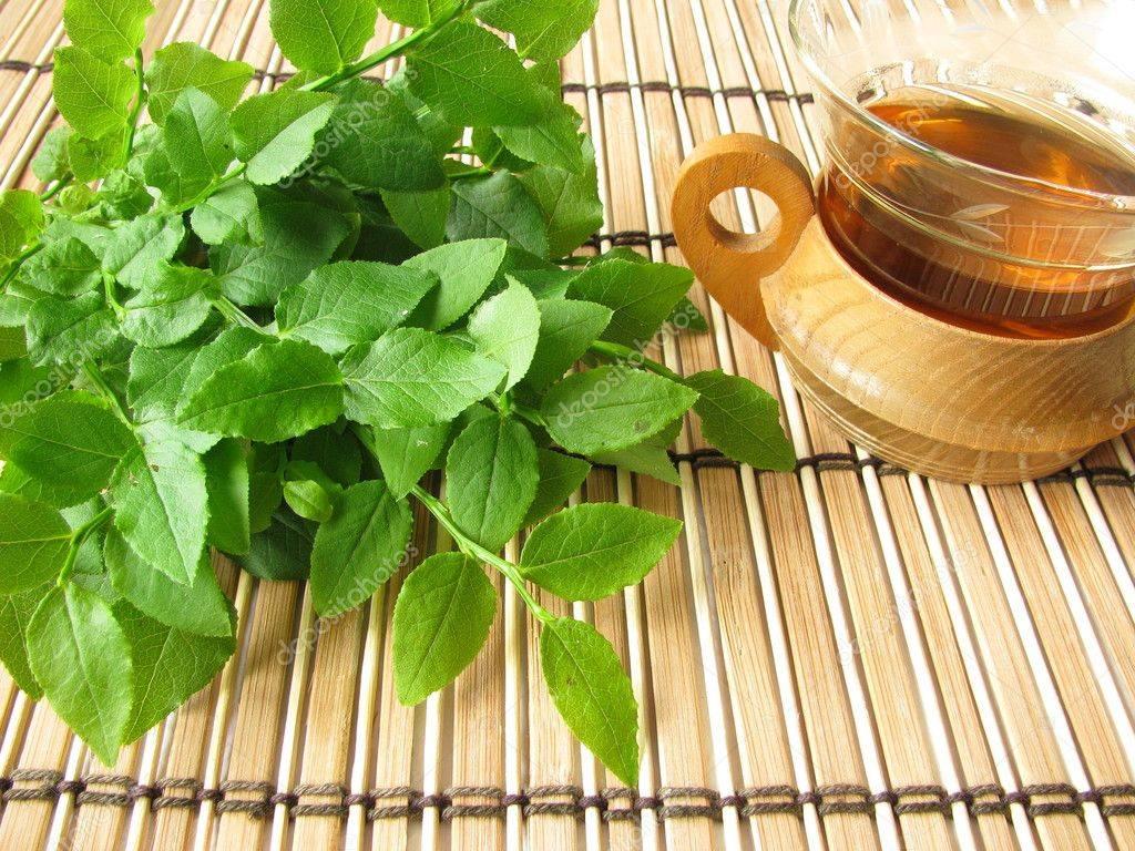 Листья черники: полезные свойства и противопоказания, применение для оздоровления