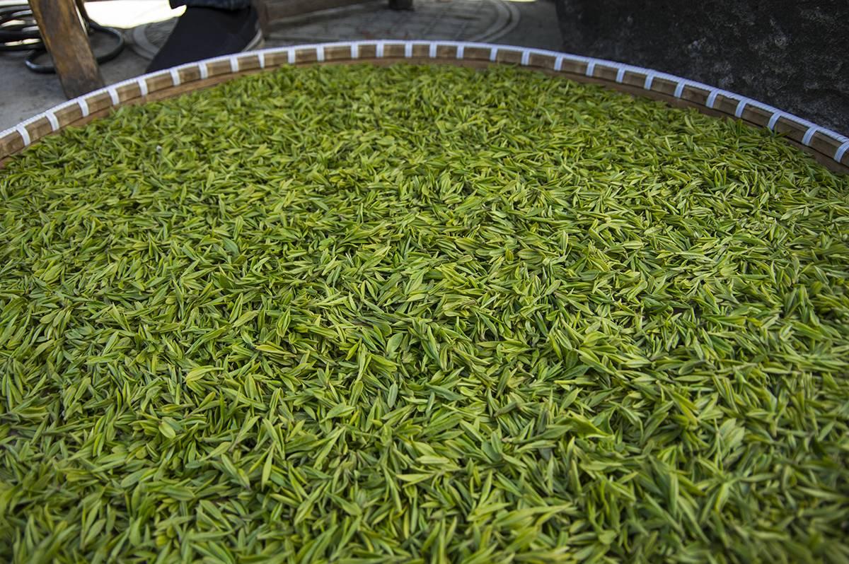 "Лунцзин, или ""колодец дракона"" - знаменитый чай китая - teaterra | teaterra"