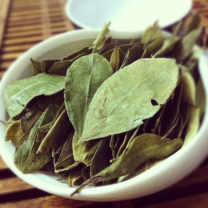 Листья черники: полезные свойства и противопоказания, применение
