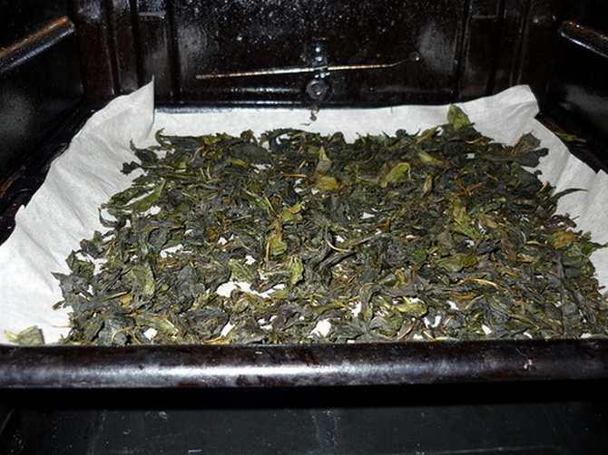 Чай из листьев малины — польза и вред