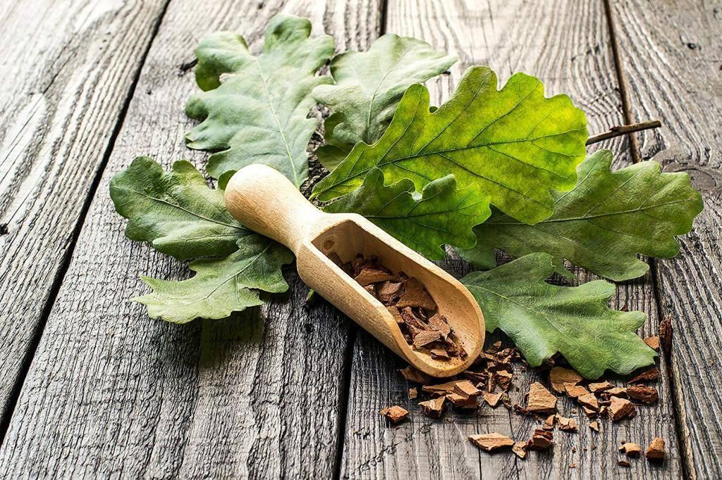 Кора дуба: лечебные свойства, применение, противопоказания, рецепты с корой дуба