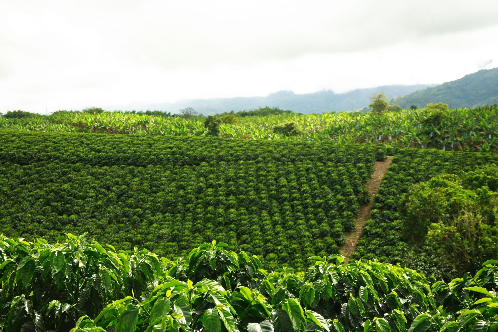 Широкий ассортимент кофе bushido и особенности напитка