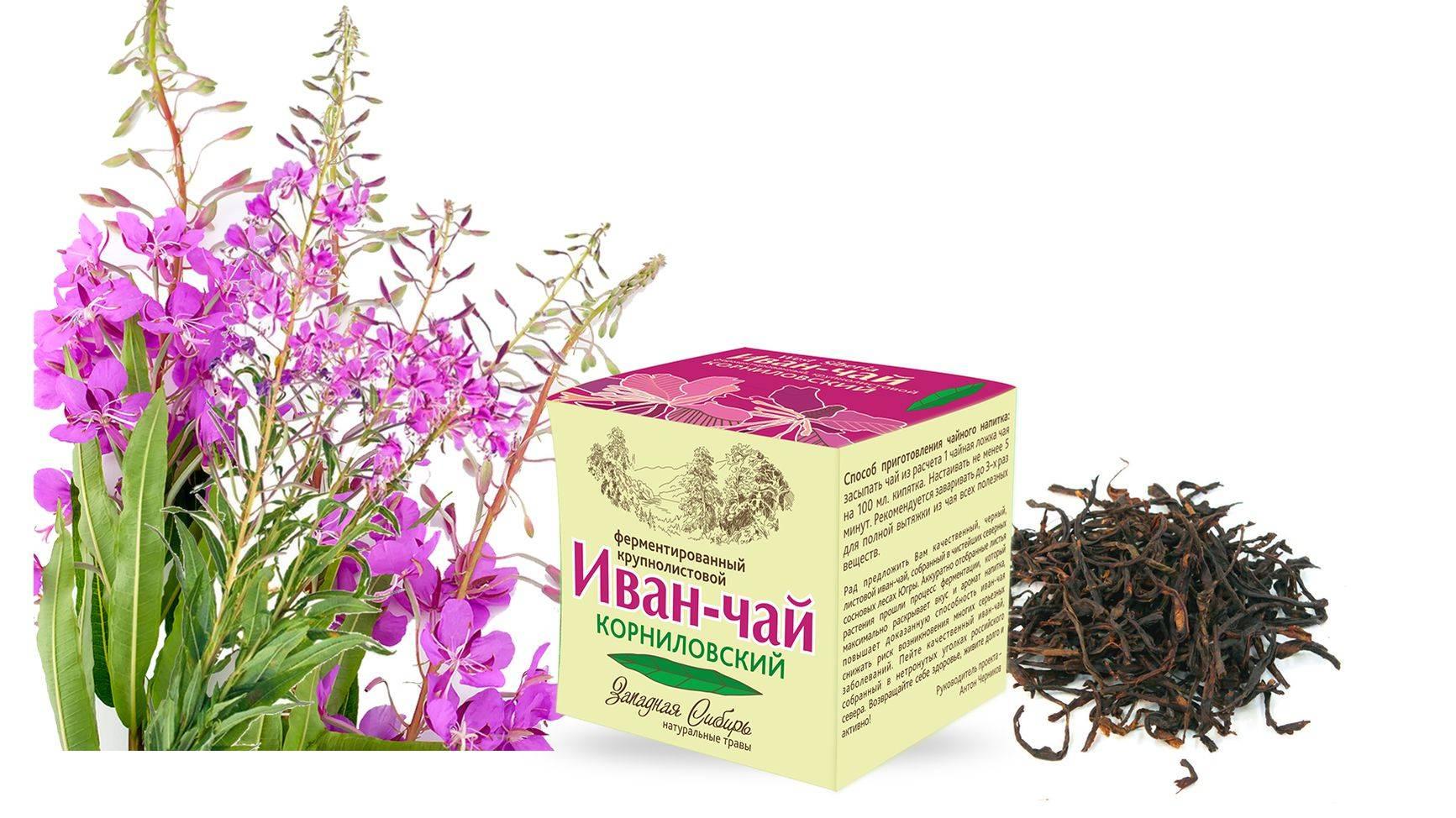Польза и вред иван-чая для мужчин