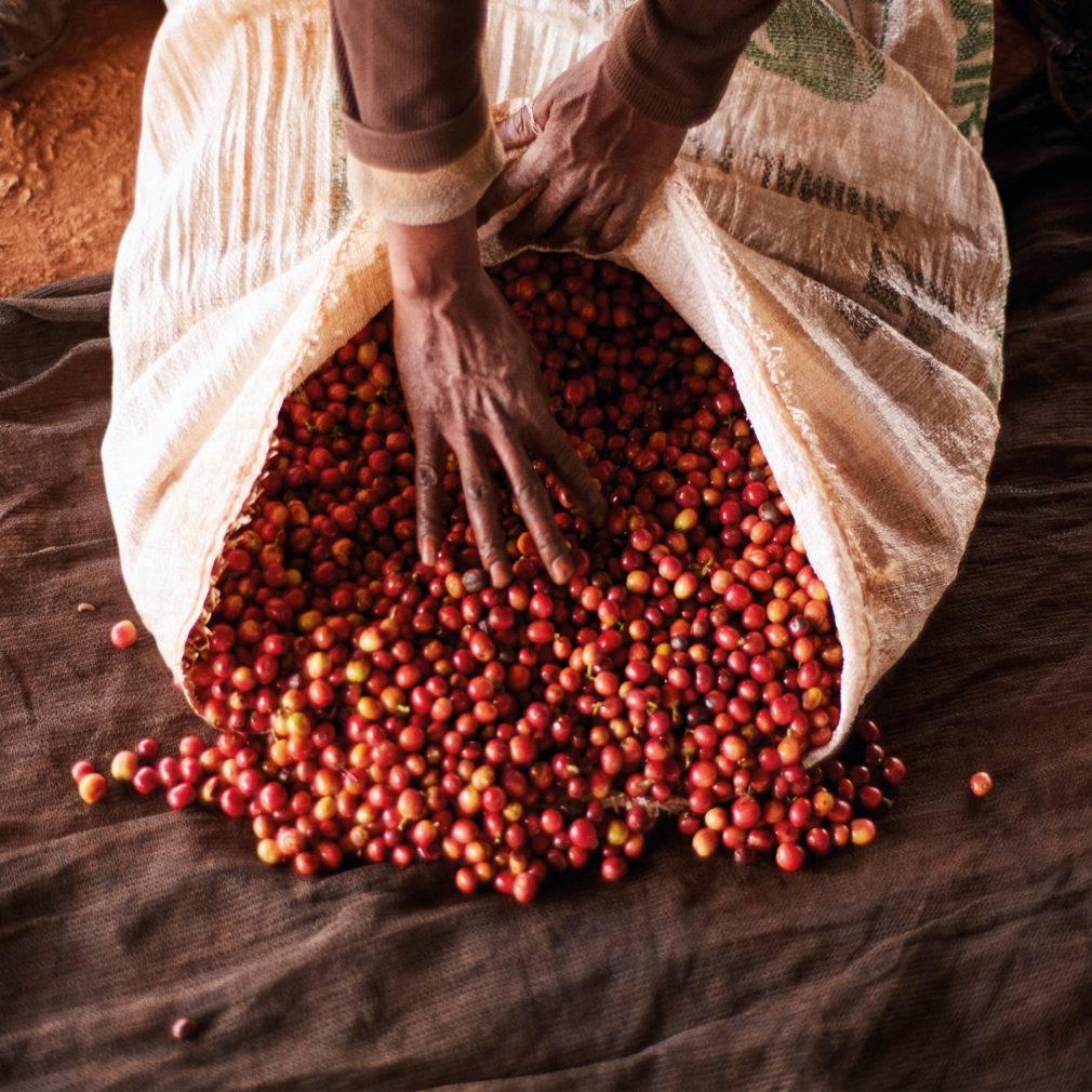 Характеристика кенийского кофе