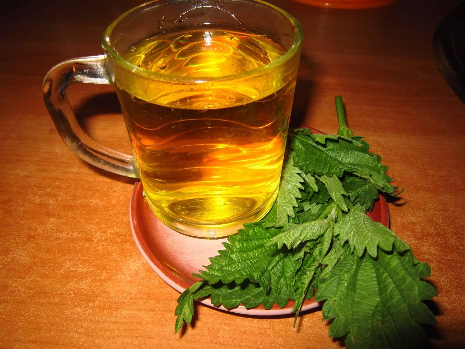 Чай из крапивы вред и польза - лечебная трава