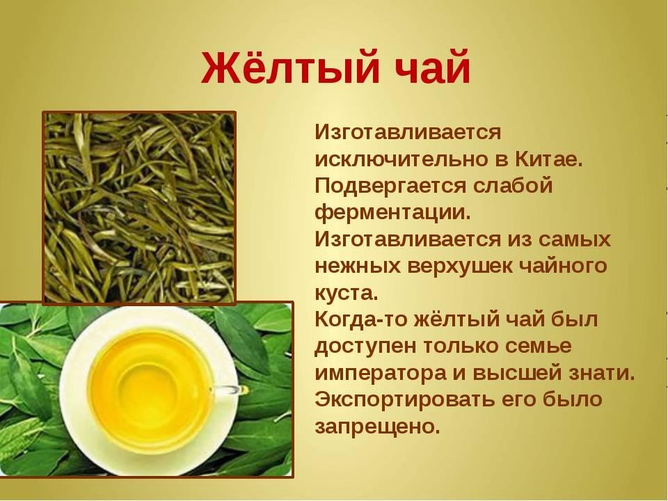 Желтый чай из египта и белый китайский чай: польза и вред