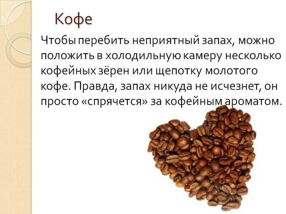 Кофейное зерно: строение, состав, виды и сорта ягоды