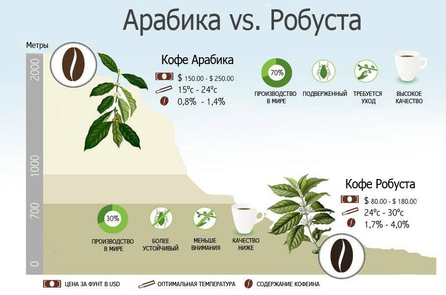 Характеристики кофе робуста