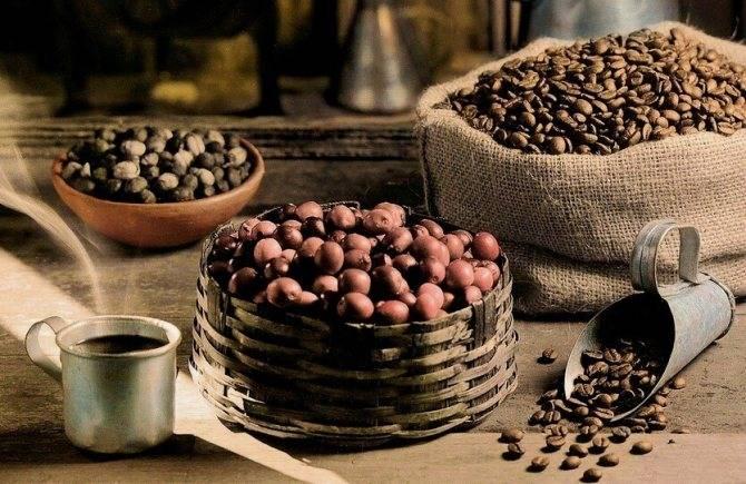 Популярные сорта бразильского кофе