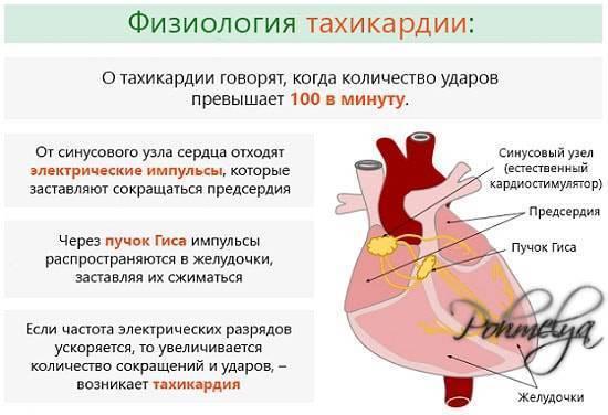 Влияет ли кофе на сердце? полезные свойства и ограничения!